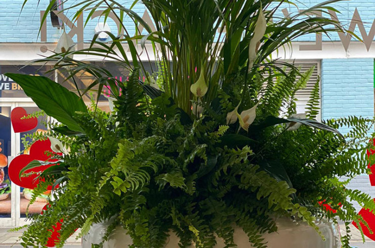 New Salon Plants from Florist 64